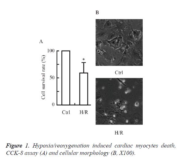 biomedres-cellular-morphology