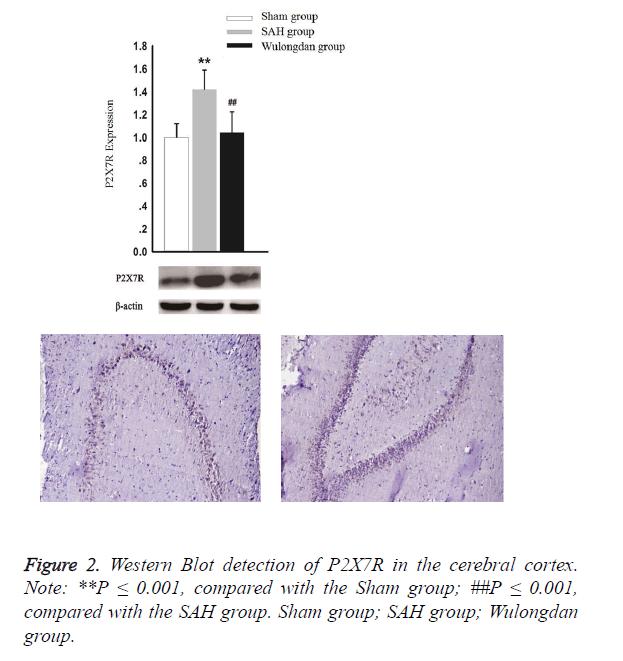 biomedres-cerebral-cortex
