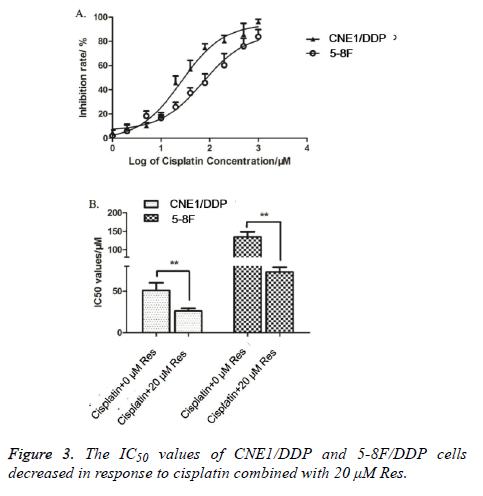 biomedres-cisplatin-combined