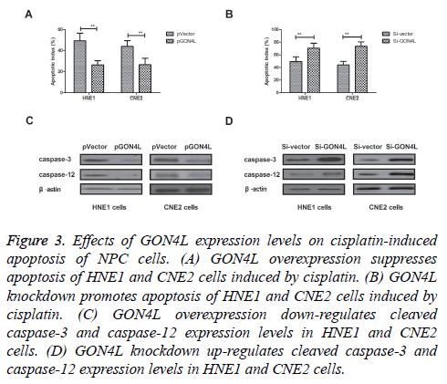 biomedres-cisplatin-induced