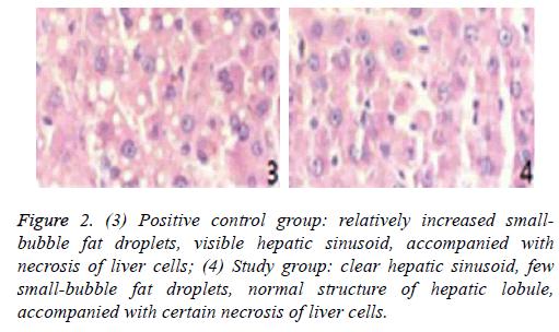 biomedres-clear-hepatic