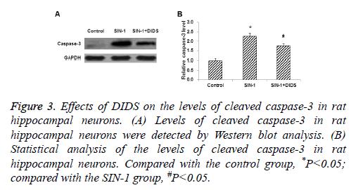 biomedres-cleaved-caspase