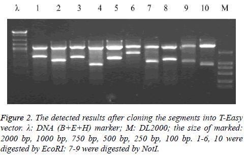 an analysis of the topic of the cloning in the biomedical research