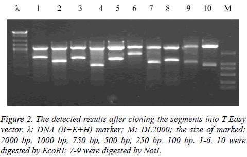 biomedres-cloning-marker