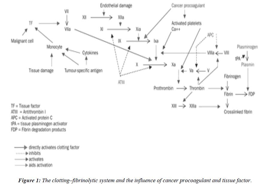 biomedres-clotting-fibrinolytic-system