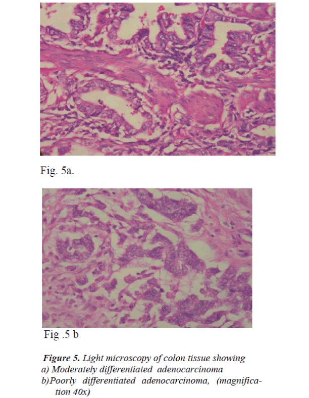 biomedres-colon-tissue