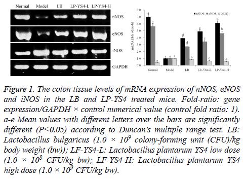 biomedres-colon-tissue