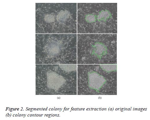 biomedres-colony-contour