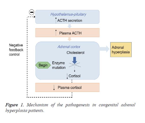 biomedres-congenital-adrenal