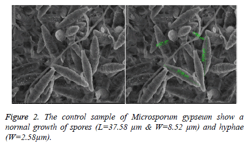 biomedres-control-sample