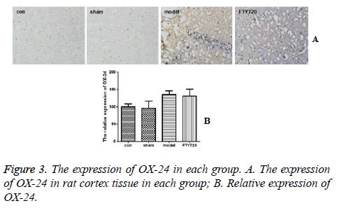 biomedres-cortex-tissue