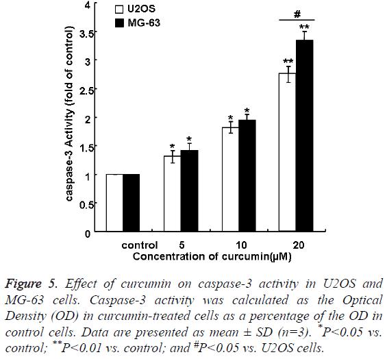 biomedres-curcumin-caspase-3-activity