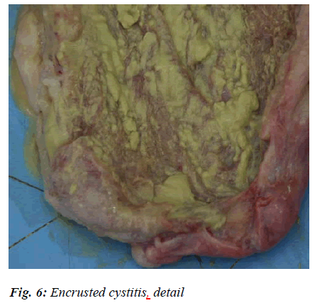 biomedres-cystitis-detail