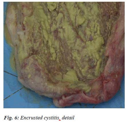 biomedres-cystitis-detail