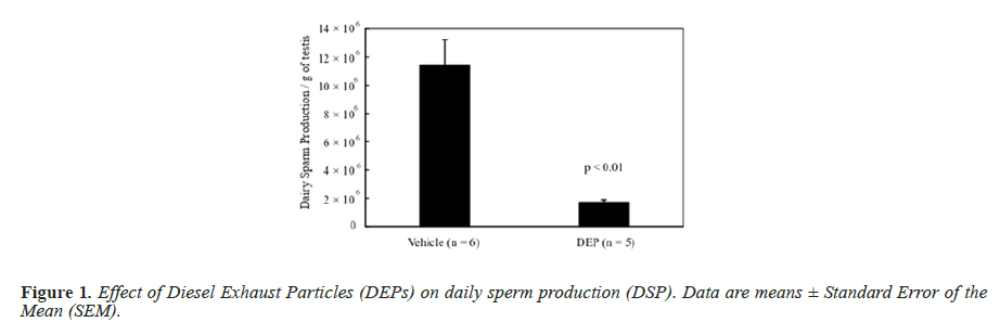 biomedres-daily-sperm-production