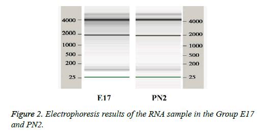 biomedres-dental-Electrophoresis