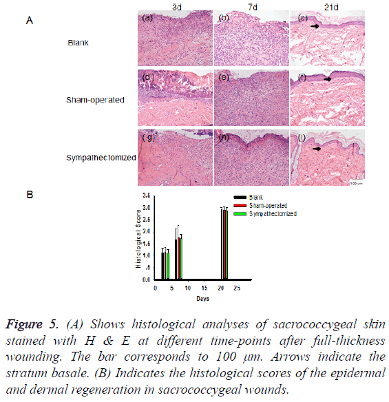 biomedres-dermal-regeneration