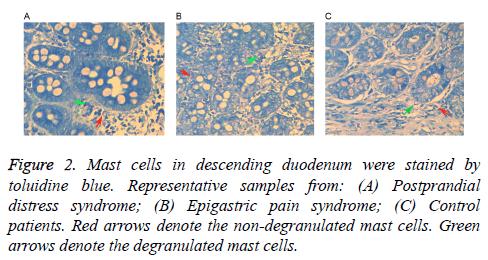 biomedres-descending-duodenum