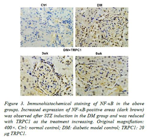 biomedres-diabetic-model-control
