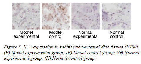 biomedres-disc-tissues