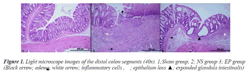 biomedres-distal-colon-segments