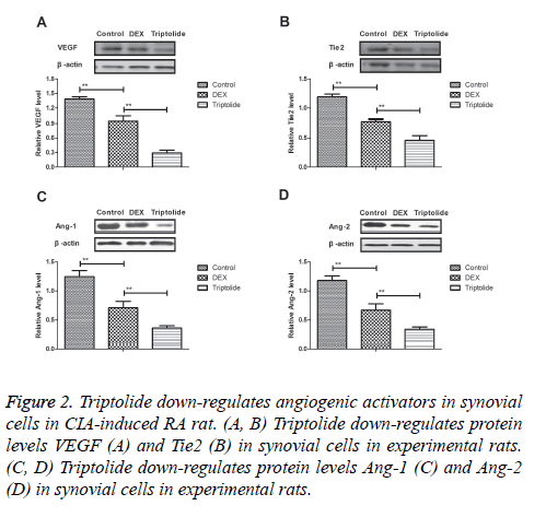 biomedres-down-regulates-angiogenic