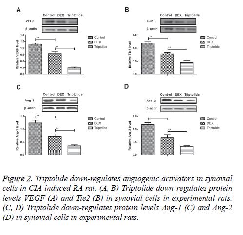 biomedres-down-regulates-angiogenic