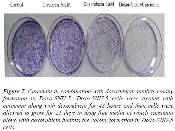 biomedres-doxorubicin-inhibits-colony