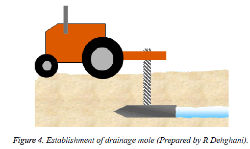 biomedres-drainage-mole