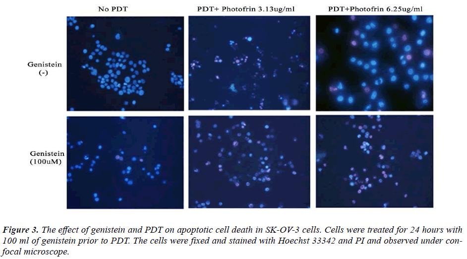 biomedres-effect-genistein-PDT