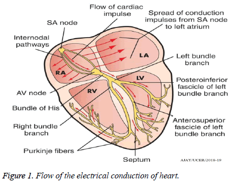 biomedres-electrical-conduction