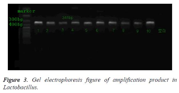 biomedres-electrophoresis