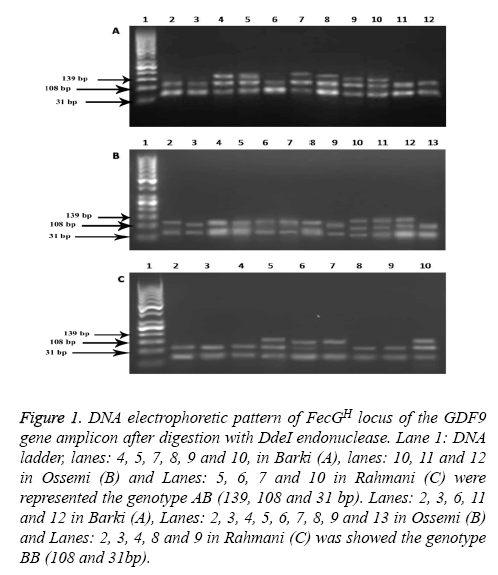 biomedres-electrophoretic-locus