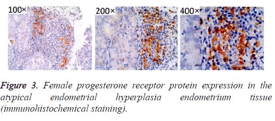 biomedres-endometrium-tissue
