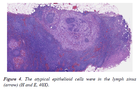 biomedres-epithelioid-cells
