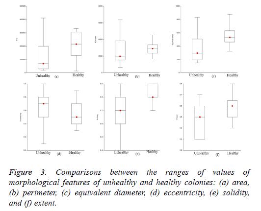 biomedres-equivalent-diameter