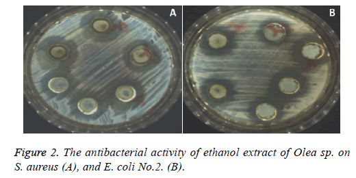 biomedres-ethanol-extract