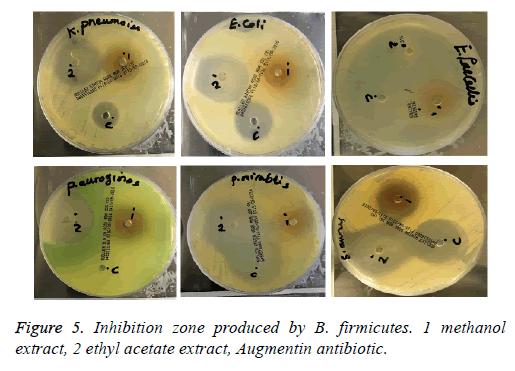 biomedres-ethyl-acetate