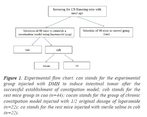 biomedres-experimental-flow-chart