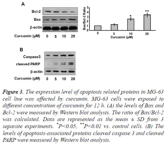 biomedres-expression-level-apoptosis