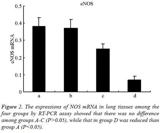 biomedres-expressions-NOS-mRNA