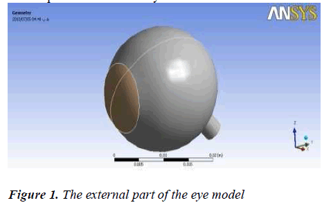 biomedres-external-eye-model