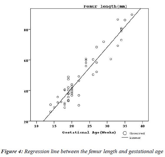 biomedres-femur-length-gestational-age