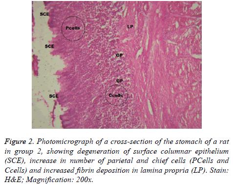 biomedres-fibrin-deposition