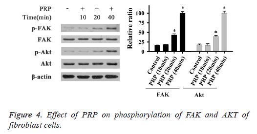 biomedres-fibroblast-cells