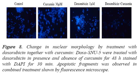 biomedres-fluorescence-microscope
