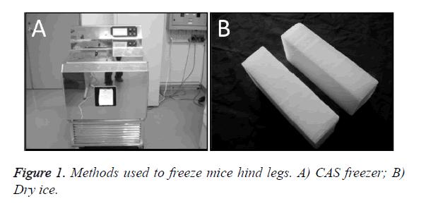 biomedres-freeze-mice