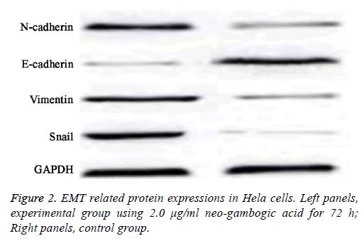 biomedres-gambogic-acid