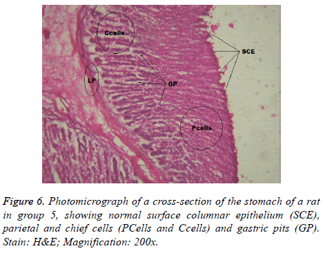 biomedres-gastric-pits