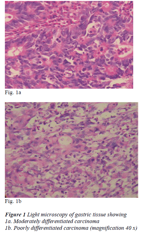 biomedres-gastric-tissue-showing